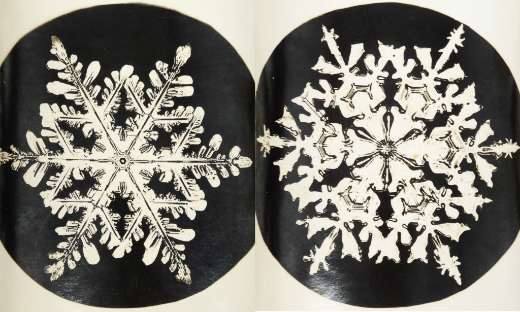 Two snowflake photographs by Wilson Bentley